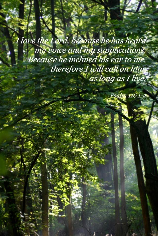 psalm 116.1-2 pic