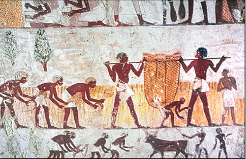 Egyptian workers harvesting grain c1420BCE